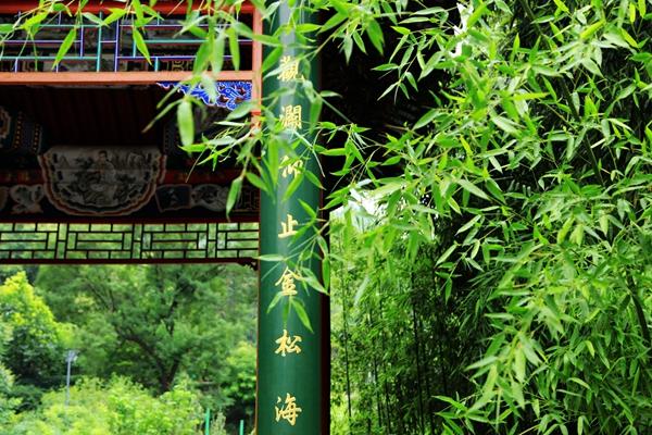 绿波掩映的竹林甬道不失曲径通幽的独特意境.